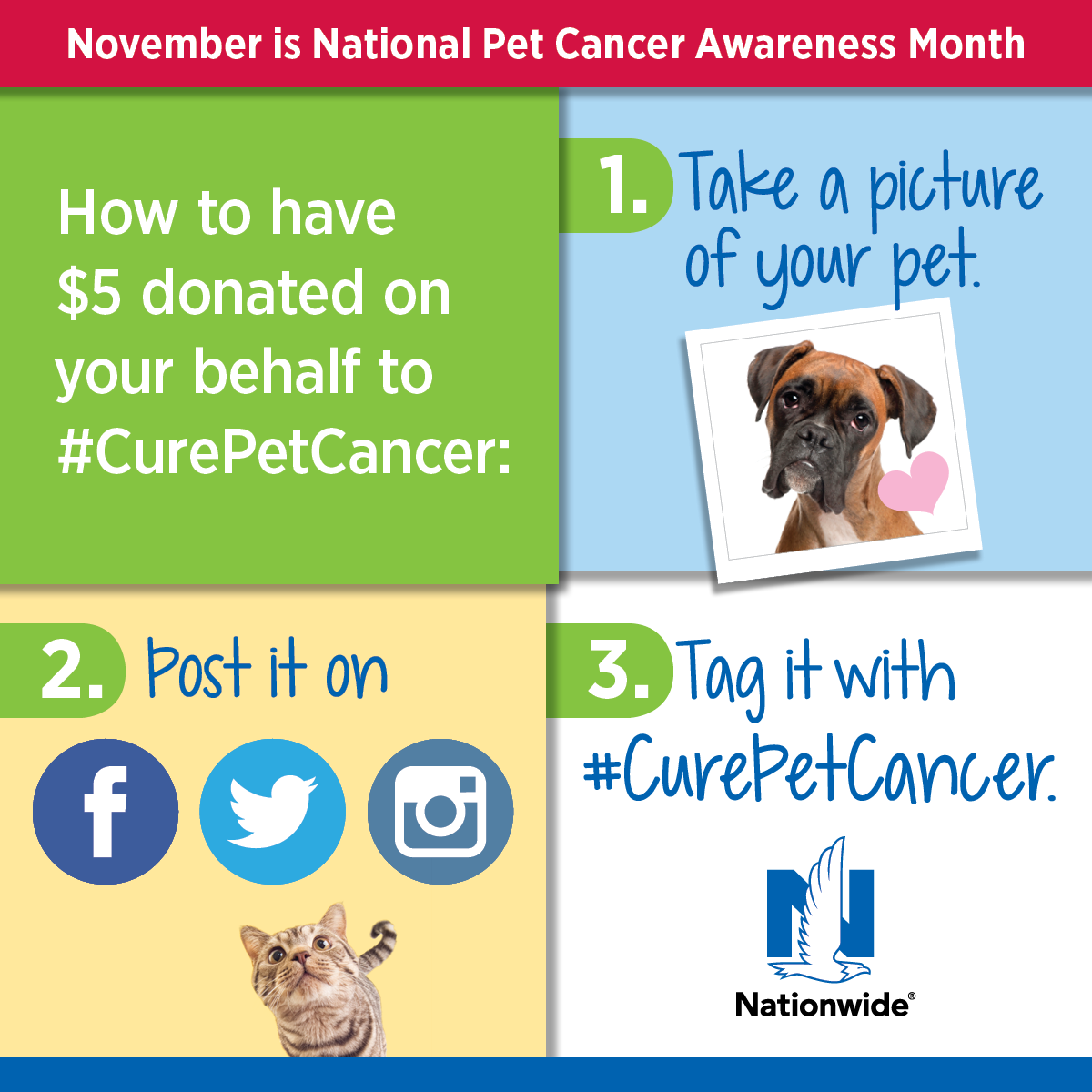 3527_Pet Cancer Awareness Month teasers_FB+IN_4